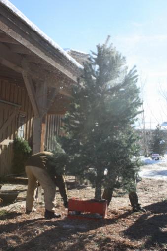 Texas Christmas Tree Farm