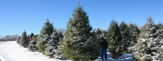 Wholesale Christmas Trees & Greenery »